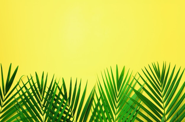 Tropical palm leaves on pastel yellow background. minimal summer concept. top view green leaf on punchy pastel paper Premium Photo