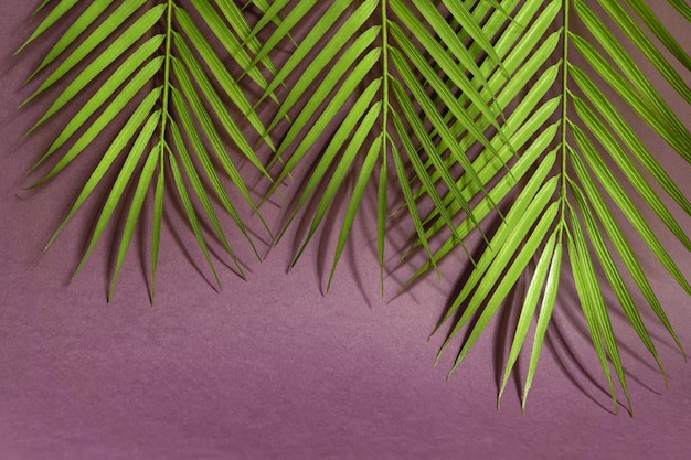 Tropical palm leaves on pink background. minimal summer concept. creative flat lay with copy space. Premium Photo