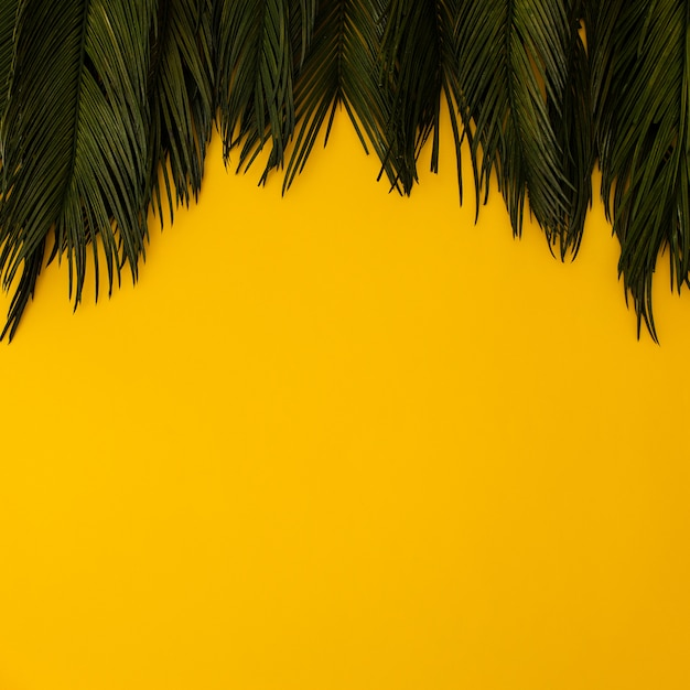 Tropical palm leaves on yellow Free Photo