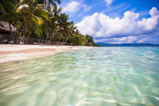 Tropical perfect beach with green palms,white sand and turquoise water Premium Photo
