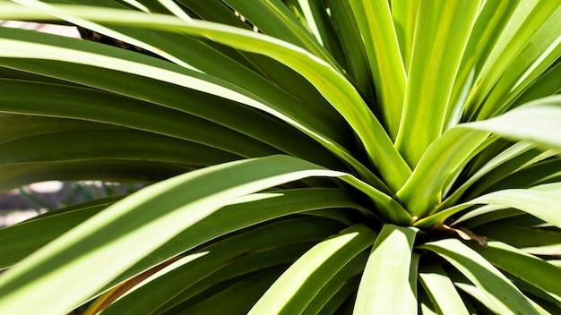 Pianta tropicale con foglie Foto Gratuite