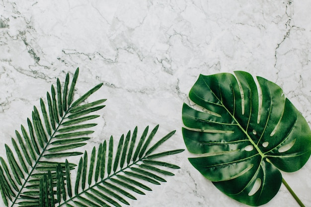 Tropical plants on a marble background Free Photo