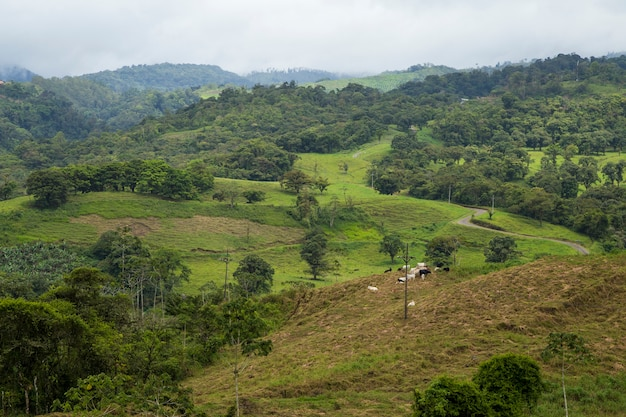 Tropical rainforest view in rainy weather at costa rica Free Photo