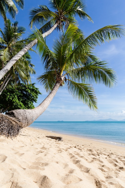 Tropical sand beach with coconut trees at the morning. thailand, samui island, maenam. Premium Photo