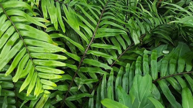A tropical scene of fern forest Premium Photo