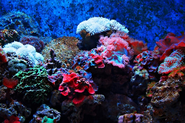 Tropical seaweed and corals Premium Photo