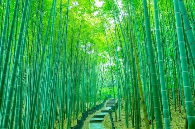 Tropical stick foliage grass green Free Photo