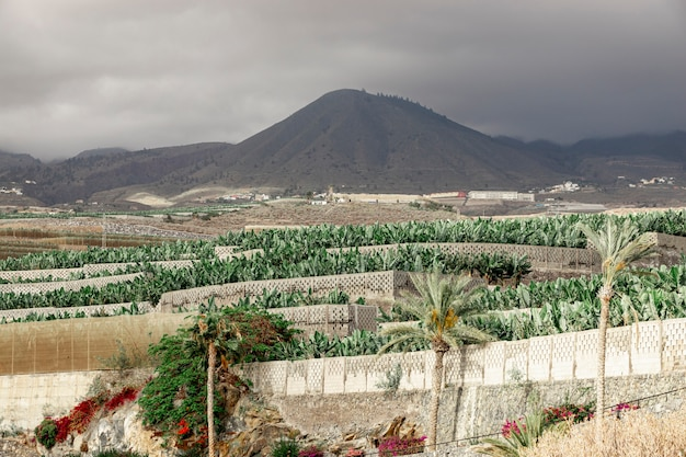 Tropical trees with a mountain background Free Photo