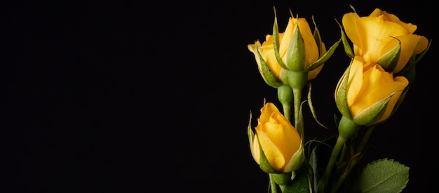 Tulips bouquet with copy-space Free Photo
