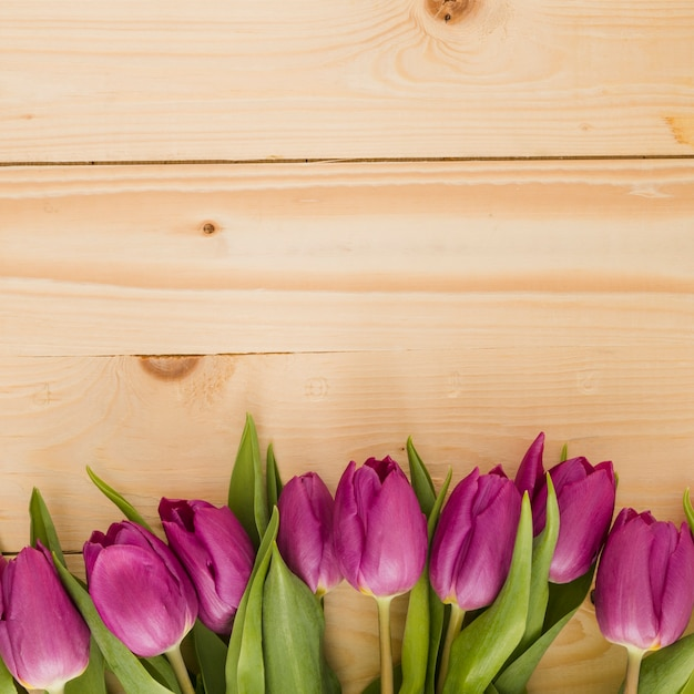 Tulips line on wooden background Free Photo
