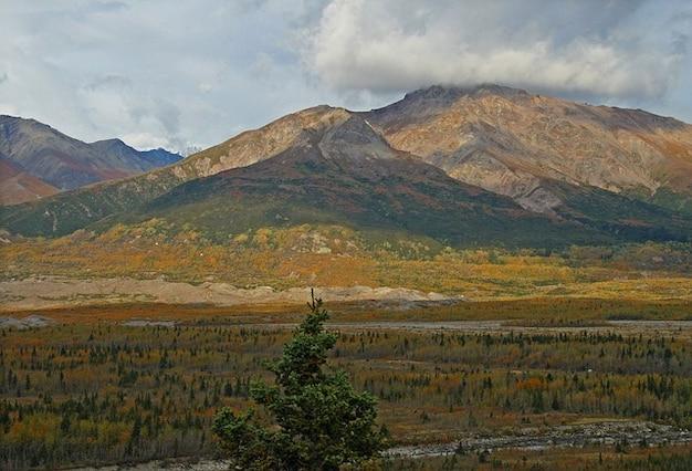 Tundra alaska wilderness forest trees mountain Photo ...