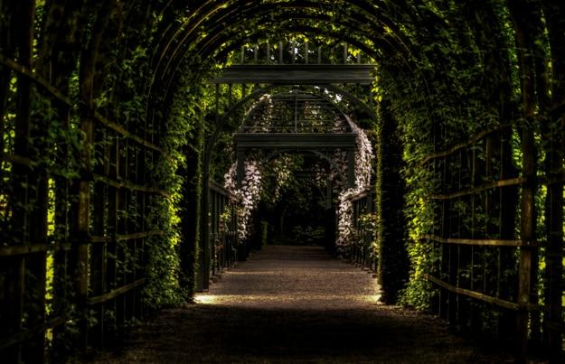 ブドウのtunel 無料写真