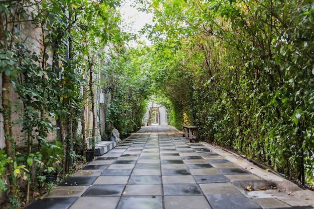 Tunnel pathway covered with green leaves Premium Photo