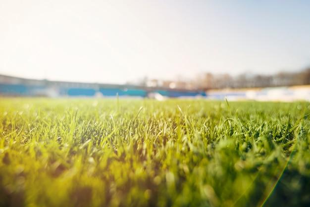 경기장에 잔디 잔디 프리미엄 사진