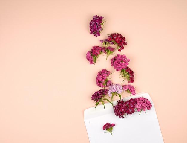 Turkish carnation dianthus barbatus flower buds and a white paper envelope Premium Photo