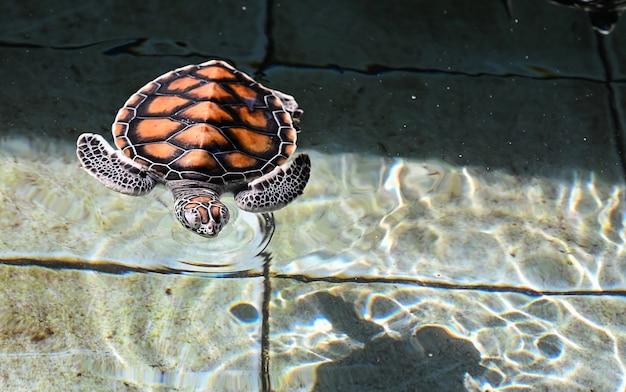 Turtle sea in thailand aquarium. Premium Photo