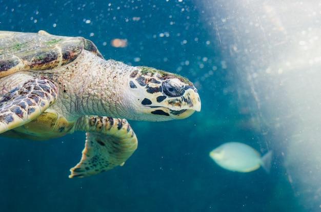 Turtle swimming in sea Premium Photo
