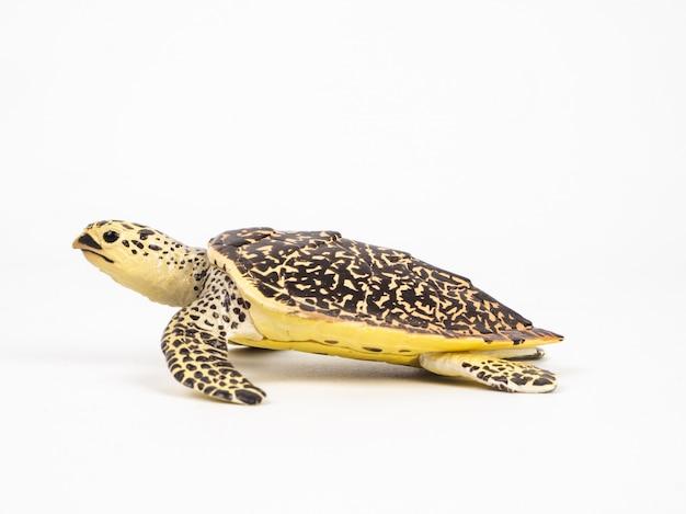 Turtle Premium Photo