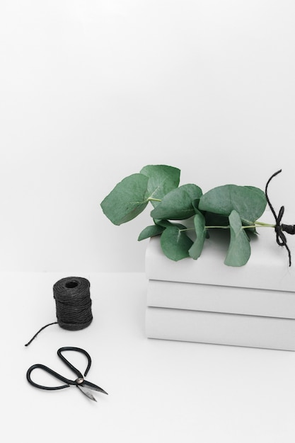 Twig on book stacked with black spool and scissor isolated on white backdrop Free Photo
