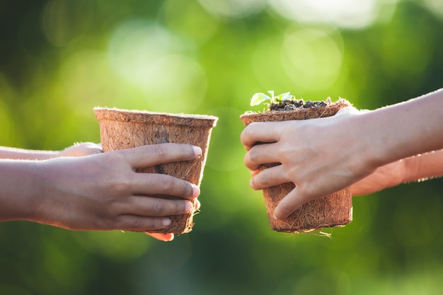 Two asian child girls holding young seedlings in recycle fiber pots together Premium Photo