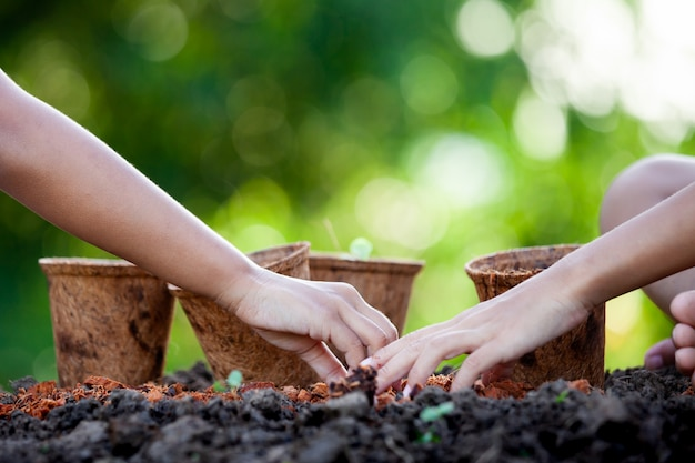 Two asian child girls planting young seedlings in recycle fiber pots together in the garden Premium Photo