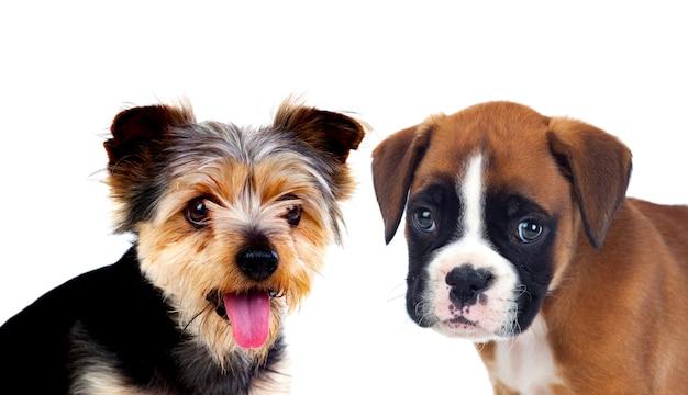 Two beautiful dogs Premium Photo