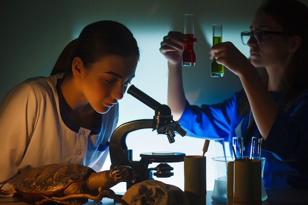 Two beautiful schoolgirls doing experiment together in the laboratory. Premium Photo