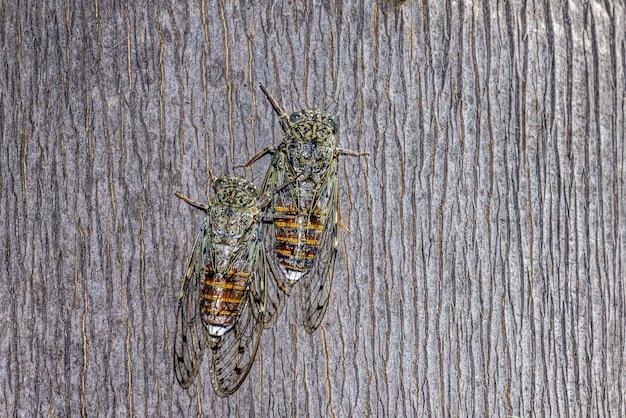 Due insetti con ali trasparenti Foto Gratuite