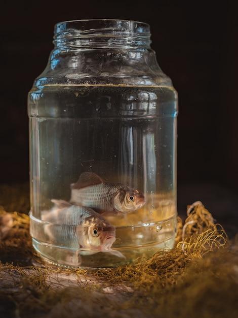釣りネットとテーブルの上のガラスの瓶に2匹の鯉魚。 Premium写真
