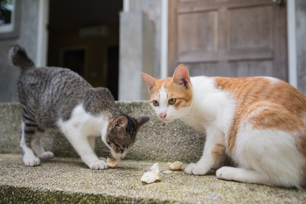 Two cats eating on the floor Premium Photo