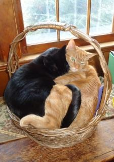 two cats in a basket photo  free download