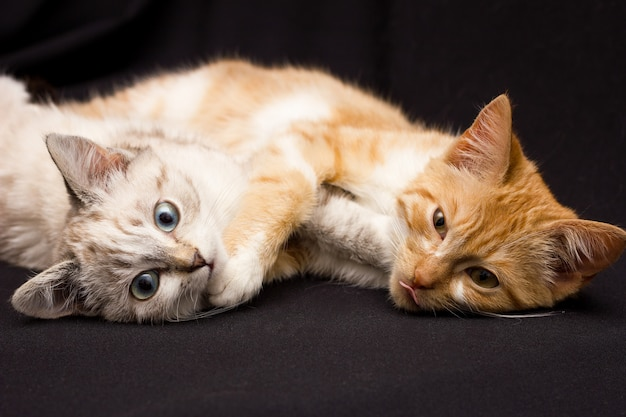 Two cats sleep in an embrace, on a black background Premium Photo