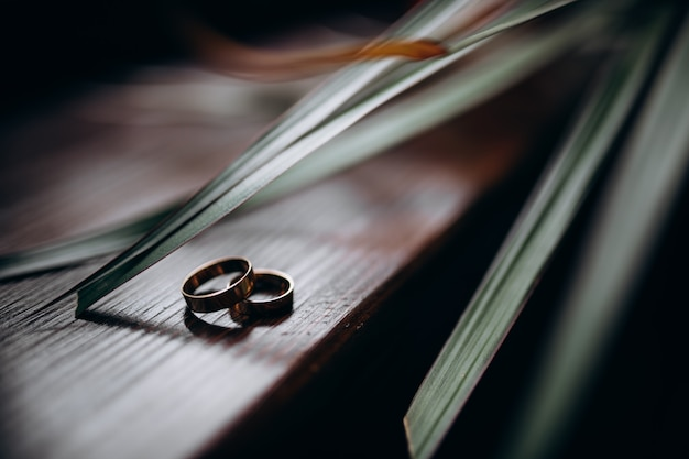 Two classy golden rings lie under green leaves on a wooden table Free Photo