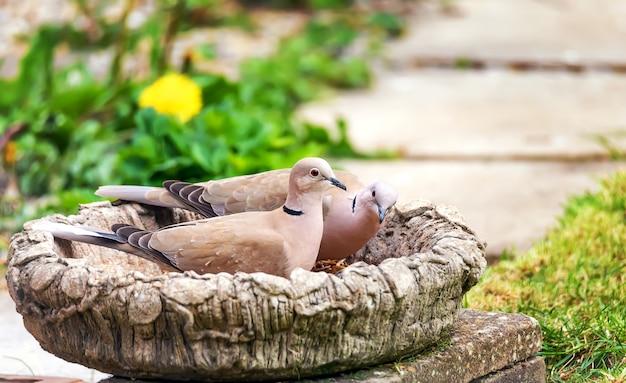 Два голубятняка сидели на вазе в саду Premium Фотографии