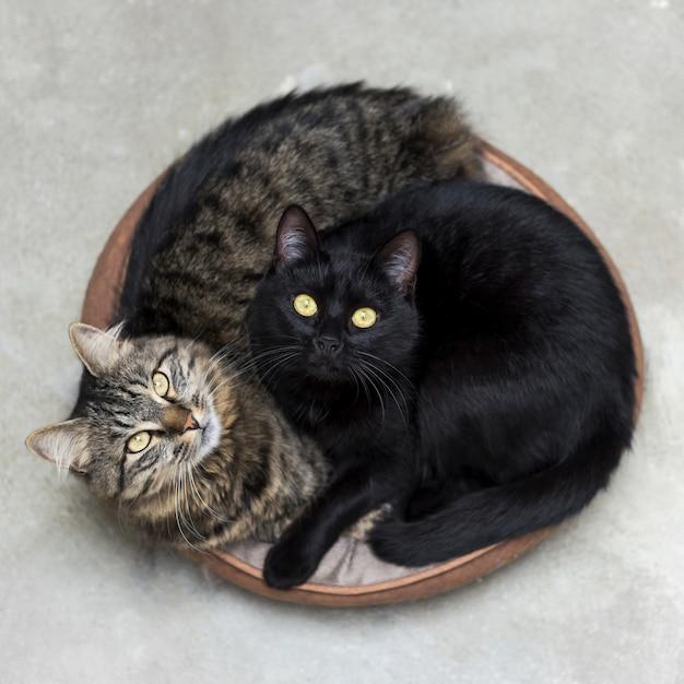 Две милые пушистые котята лежат в корзине удивленно Бесплатные Фотографии