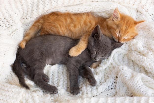 2つのかわいいとらの子猫が寝て、白いニットスカーフを抱き締めます。 Premium写真