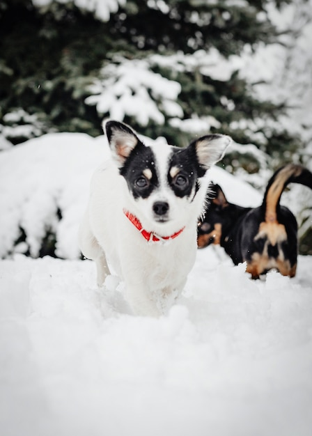 Two dogs playing Free Photo