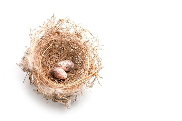 Два яйца голубь птиц в гнезде сухой травы на белом Premium Фотографии