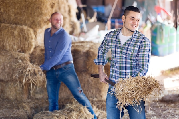Two farm workers in hayloft Premium Photo