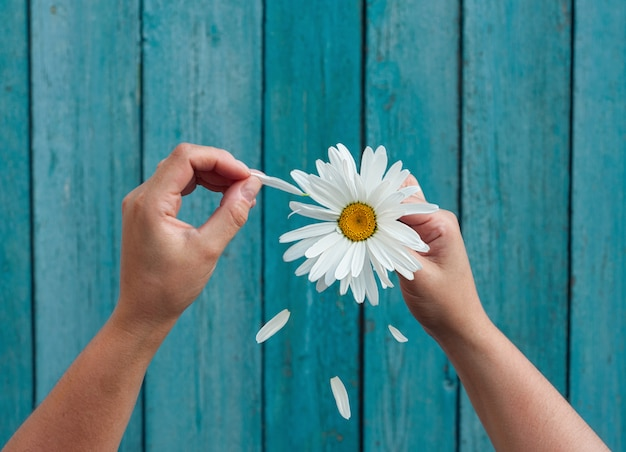Two female hands hold in hand big white daisy petals and tear Premium Photo