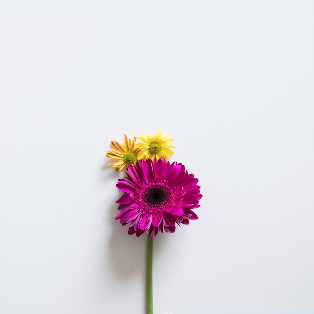 Two Flowers For Spring Photo Free Download