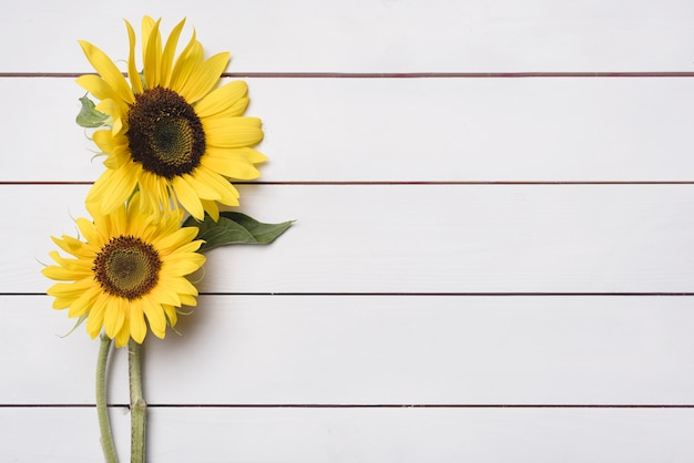 Two fresh sunflowers on wooden plank backdrop Free Photo