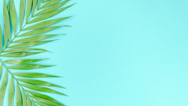 Two green palm leaves on table Free Photo