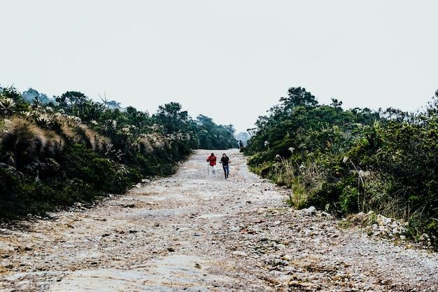 Due escursionisti che camminano per la strada circondati da piante verdi Foto Gratuite