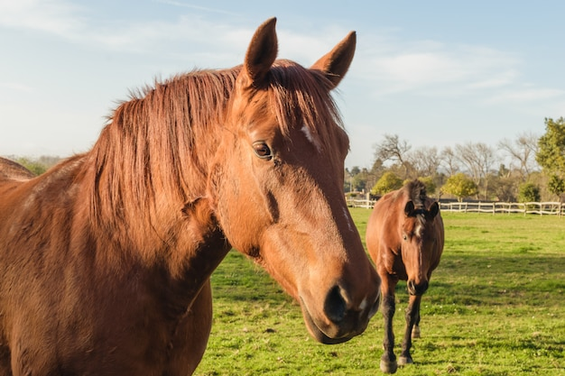 Two horses in a farm close up. rural rquine background Premium Photo