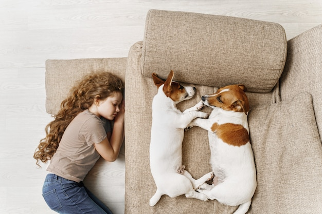 jack russell are sleeping on the bed
