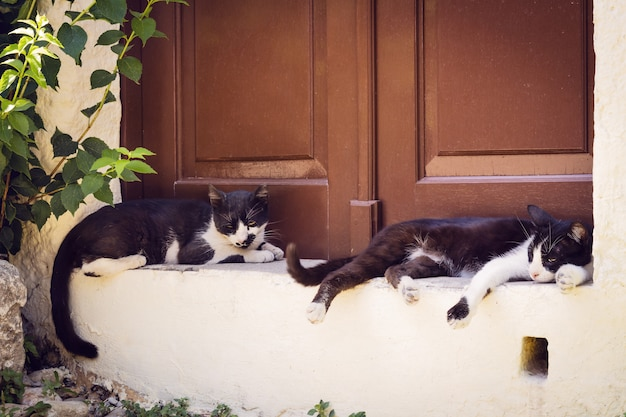 Two lazy cast lying outdoors in the shadow Premium Photo