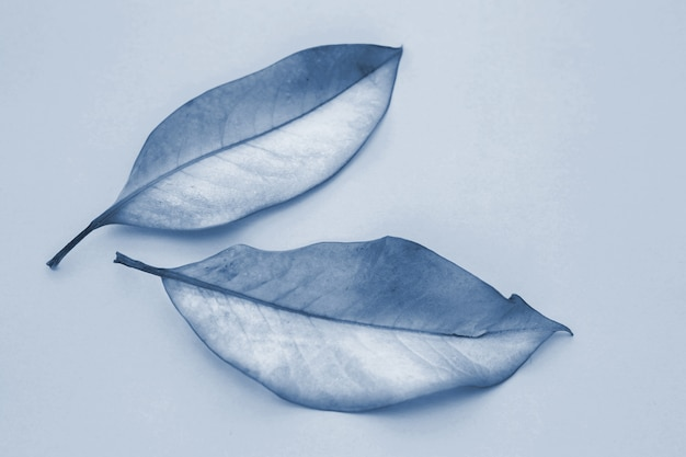Two leaves in classic blue 2020 Premium Photo