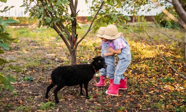 Two little blonde kids playing in the garden. children feeding black sheep Premium Photo