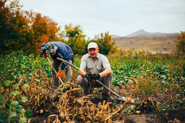 Два мема роют картошку в саду. Premium Фотографии